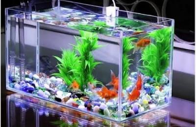 Cách khử clo trong nước máy để nuôi cá