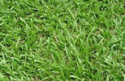 Cách chọn máy cắt cỏ phù hợp với loại cỏ