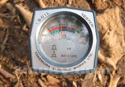 Tại sao bạn nên lưu ý về độ PH của đất