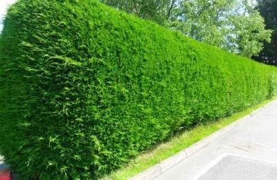 Cách làm hàng rào bằng tre