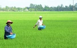 Công nghệ bón phân cho lúa bằng máy phun phân bón.